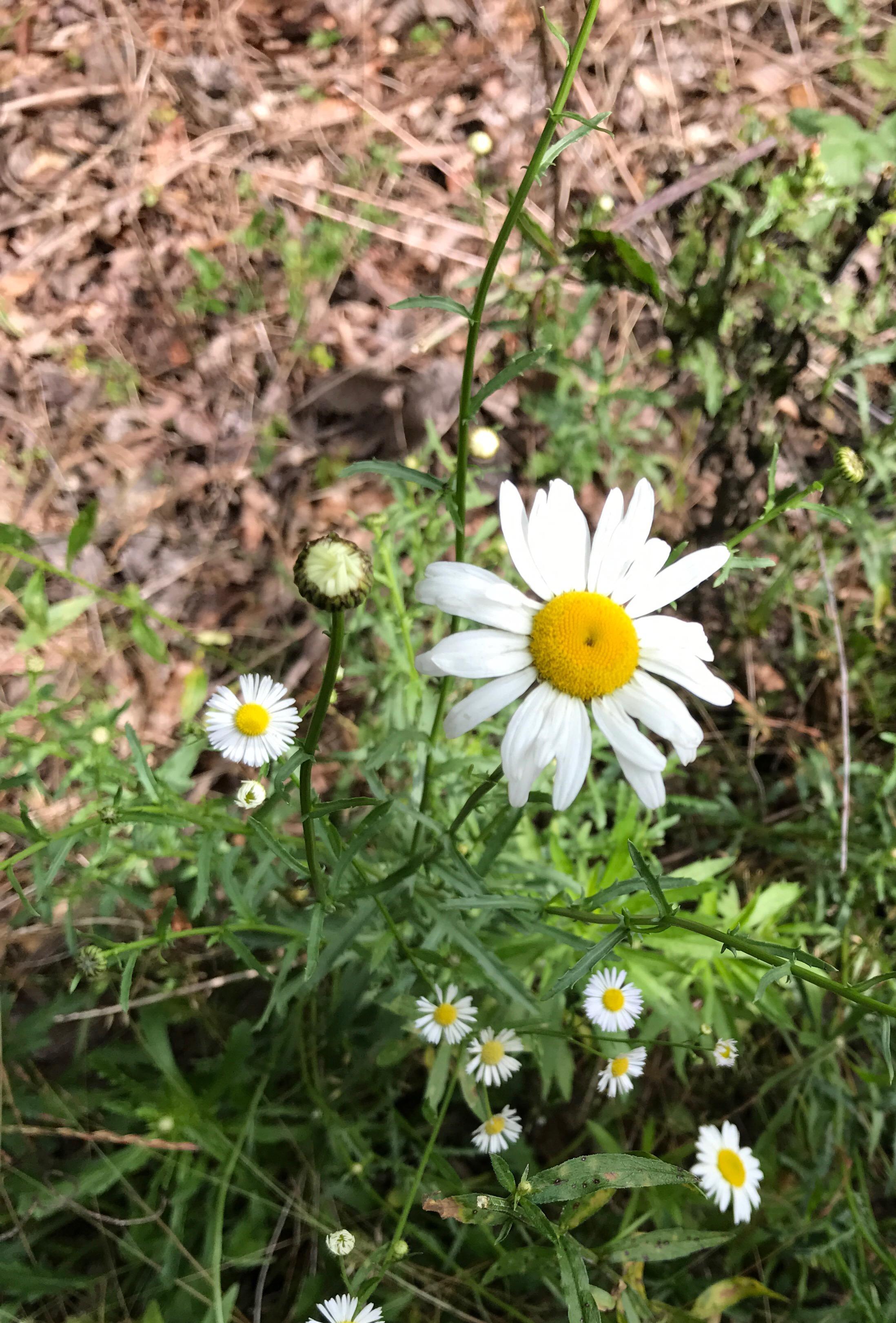 Today's Treasures:  Wild Flowers & Ivy